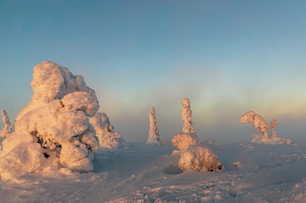 雪のある冬景色は、冬の森の木をカバーしました。