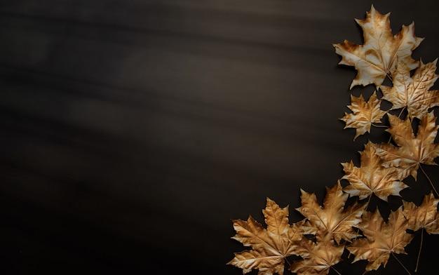 黒い背景に金色のカエデの葉