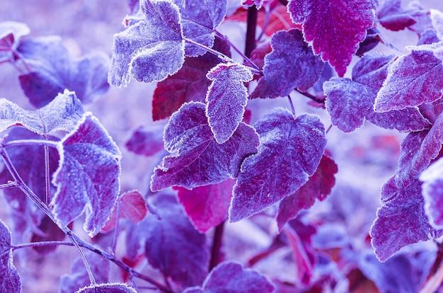 Фон из ярких листьев, покрытых инеем