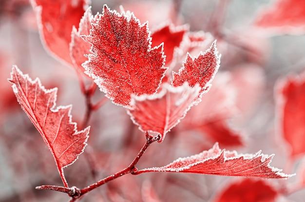 Фон из ярких листьев, покрытых инеем. осенние морозы. крупный план.