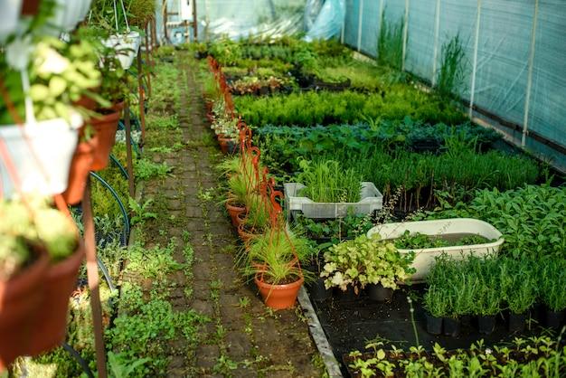 植物、茂み、花を育てる小さな温室。ホームエリアでの国内共同農業