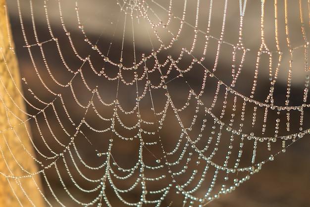 Капля конденсата на паутине