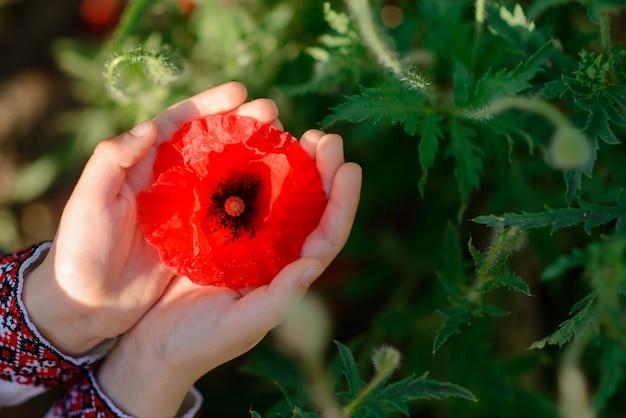 人間の手でケシの花の美しい芽。