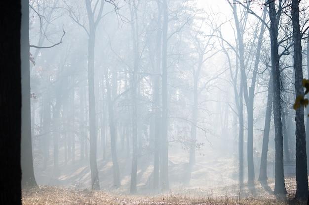 霧の秋の森。イルピンウクライナ