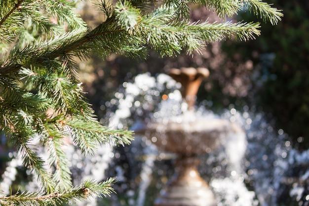 Фонтан в парке с еловыми ветками. фон.