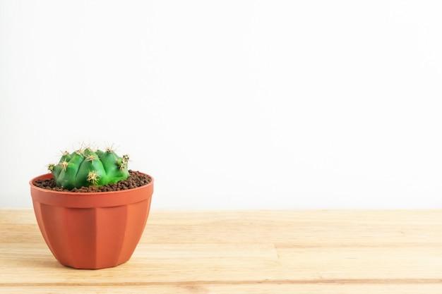 サボテンや木製のオフィスのテーブルと白い背景の上の鍋で多肉植物