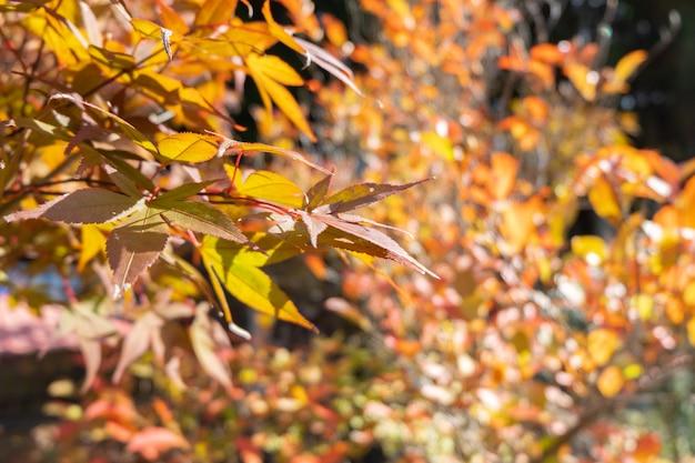 色鮮やかな木々、秋、九州、日本の美しい赤と黄色の葉