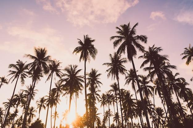 ココヤシのヤシの木