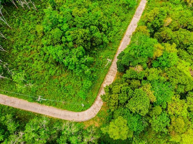 道路のある森の中の木の航空写真