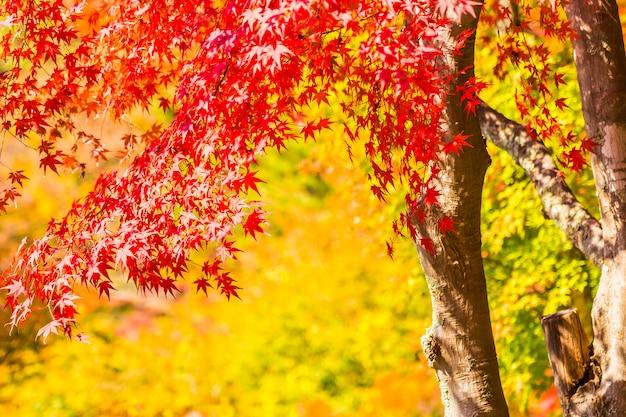 ツリー上の美しい赤と緑のメープルリーフ
