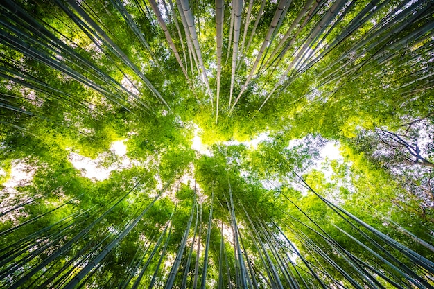 嵐山の森の竹林の美しい風景