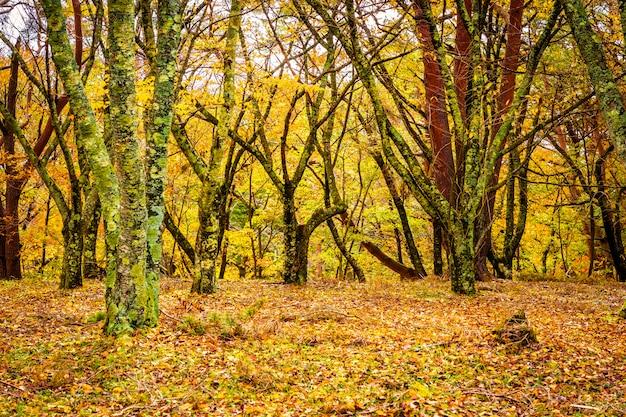 Красивое дерево кленовый лист в осенний сезон