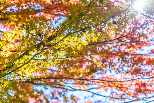 Красивый пейзаж с кленовым листом дерева в осенний сезон