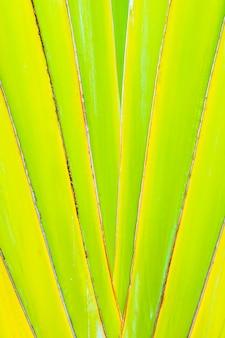 背景の美しいグリーンバナナの葉のテクスチャ
