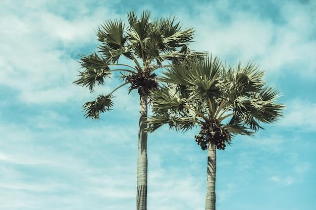 ココヤシの木