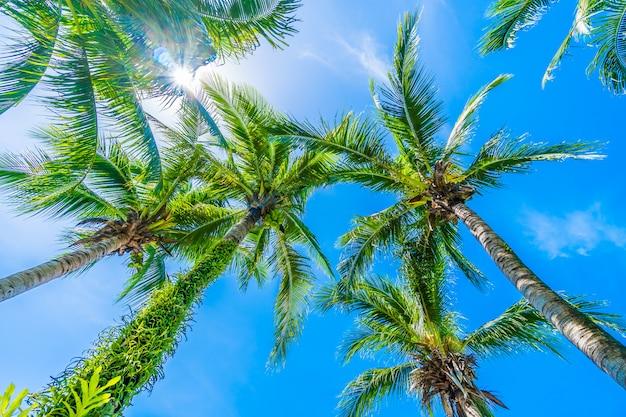 青い空にココヤシの木