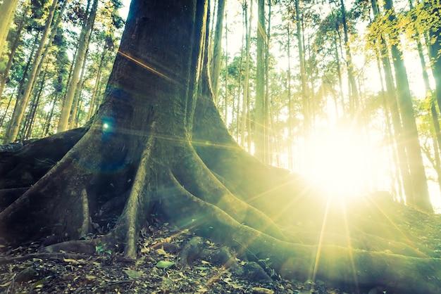ジャングルの森