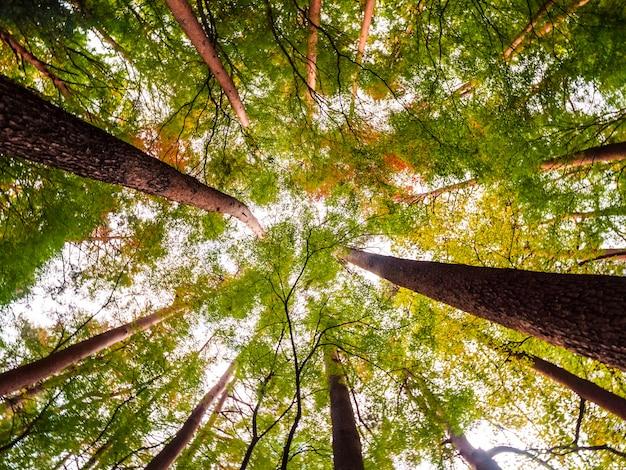 Красивый пейзаж большого дерева в лесу с низким углом зрения ангела