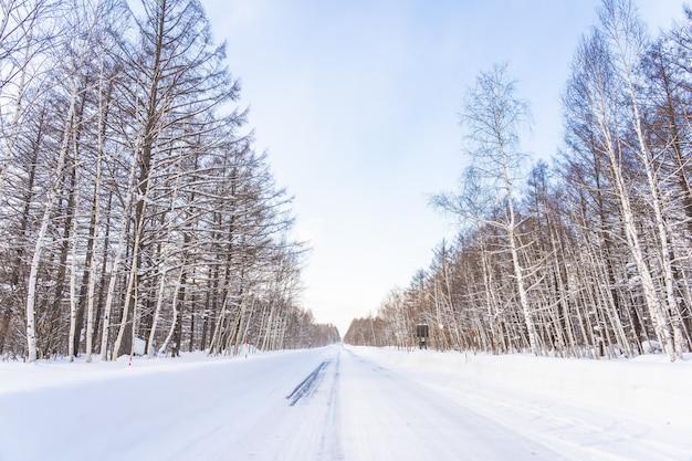 北海道の雪冬シーズンの木と美しい屋外の自然風景