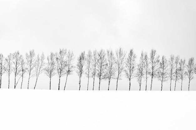 Красивый открытый природный ландшафт с группой веток деревьев в снежный зимний сезон