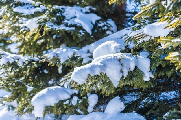クリスマスツリーと美しい屋外の自然風景
