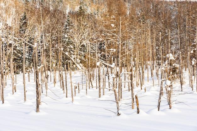 雪の冬の季節に青い池の木の枝を持つ美しい屋外の自然風景