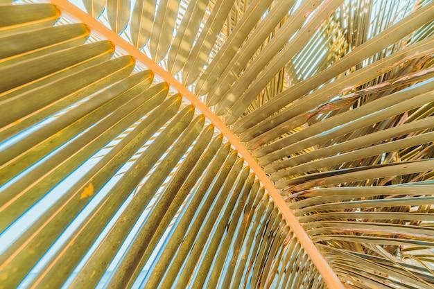 上空の背景とココナッツの葉を閉じる