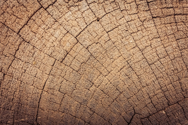 Текстуры старого дерева