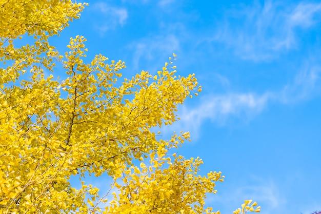 黄色のイチョウの葉