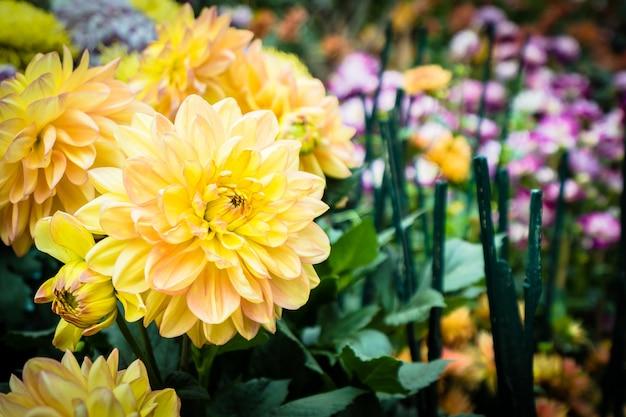 庭のカラフルな花