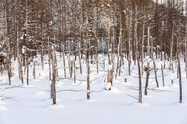雪の冬の季節に青い池の木の枝と美しい屋外の自然風景