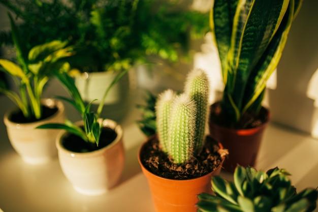 植木鉢の緑の植物は白い机の上に立つ