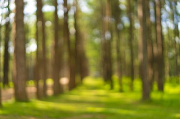 ぼんやりした緑、松林の背景。フォーカス効果のうち。