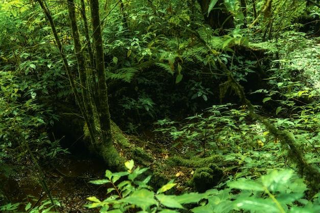 緑の森の風景。朝の緑の葉