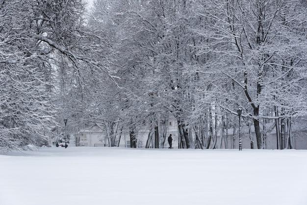 コローメンスコエ公園、雪の中で冬の風景の木