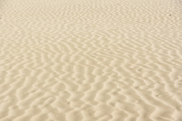 黄金の砂漠の砂丘