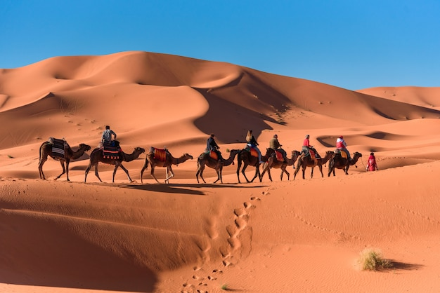 Караван, идущий в пустыне мерзуга сахара в марокко