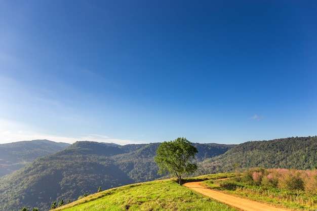 タイの山の上の単一の木と未舗装の道路