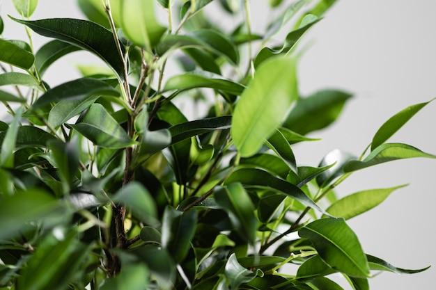 植物に水をまくのビデオを閉じます。ホームガーデニングのコンセプトです。生態学
