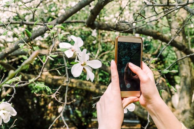 女の子は、スマートフォンのカメラでマグニロアの花の写真になります。ソーシャルメディア