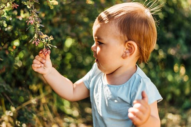 男の子は緑の葉に触れます。ライフスタイルのホームスクーリング、エコライフ、意識、自然開発に近い。晴れた日