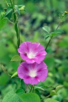 Крупный план розового полевого цветка