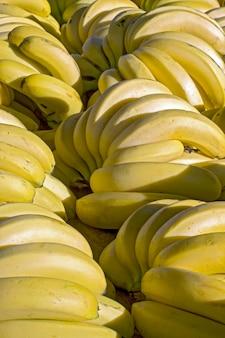 ストリートマーケットの屋台でバナナの束のクローズアップ