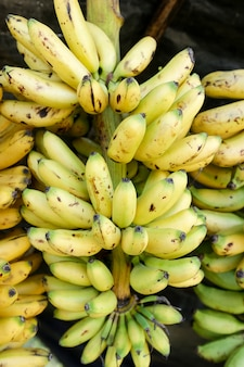 バナナ品種