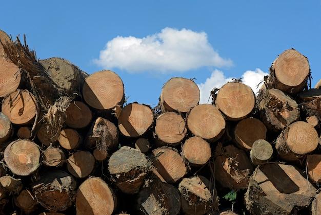 青空の下で木の丸太のスタック