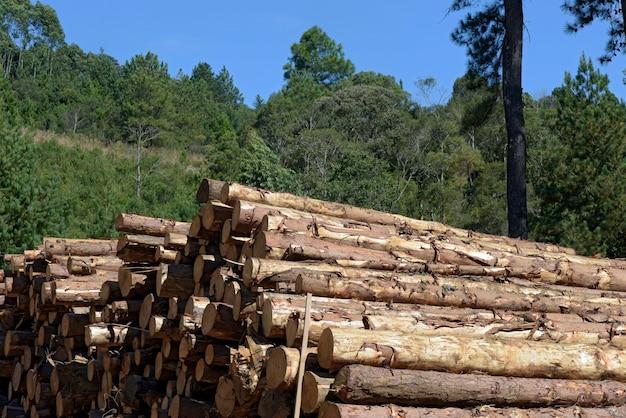 製材所、視点で木の幹の山のクローズアップ