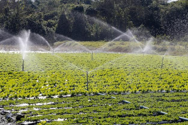 野菜の植え付けで使用されている灌漑システム