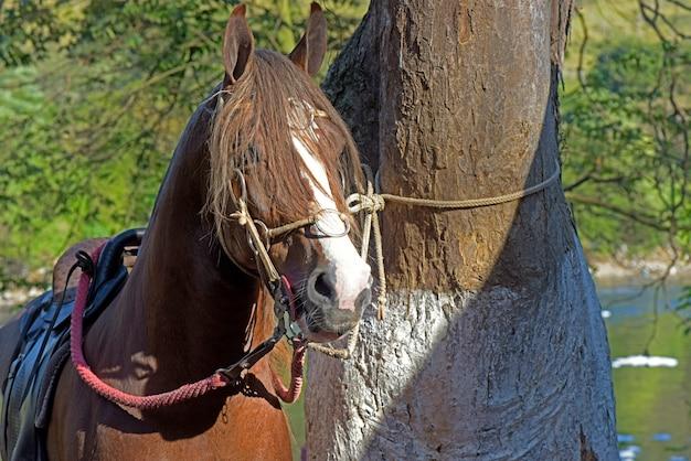 木の幹と馬の頭のクローズアップ