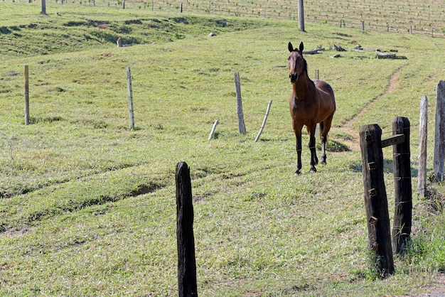 緑の草と木と牧草地の馬