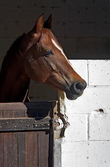 安定した木製のドアで馬の頭のクローズアップ